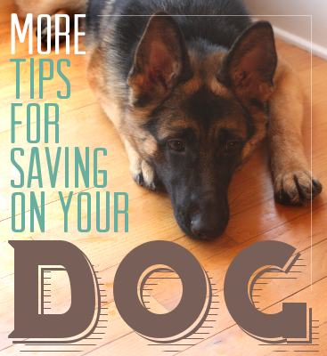 MORE tips for saving on your dog